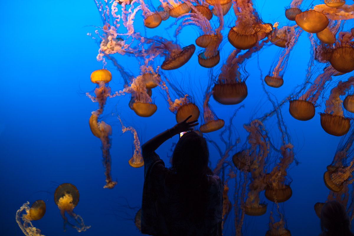 Lifestyle bloggers Devin and Marlene of Outlined Cloth explore Monterey Bay Aquarium